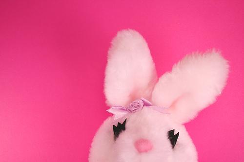 Sofia's Bunny